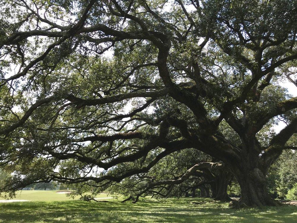 new-orleans-audubon-park-lauren-schwaiger-blog.jpg