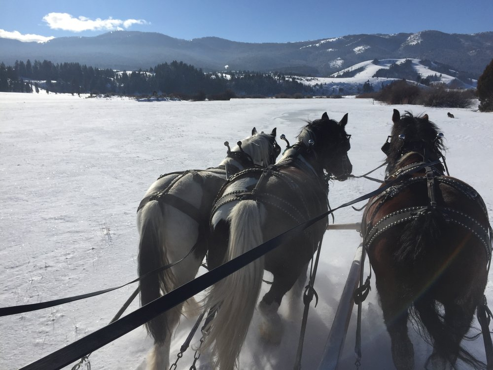 Sleigh Rides in the mountains