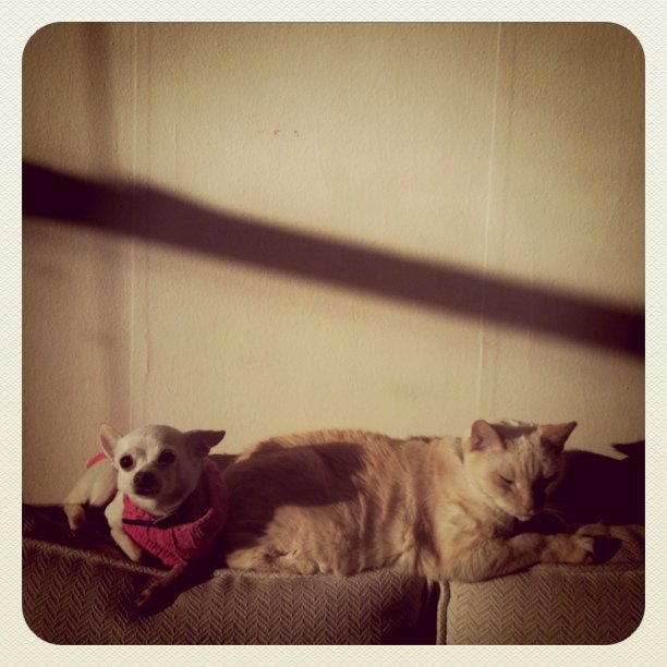 Buddies (Taken with  instagram )