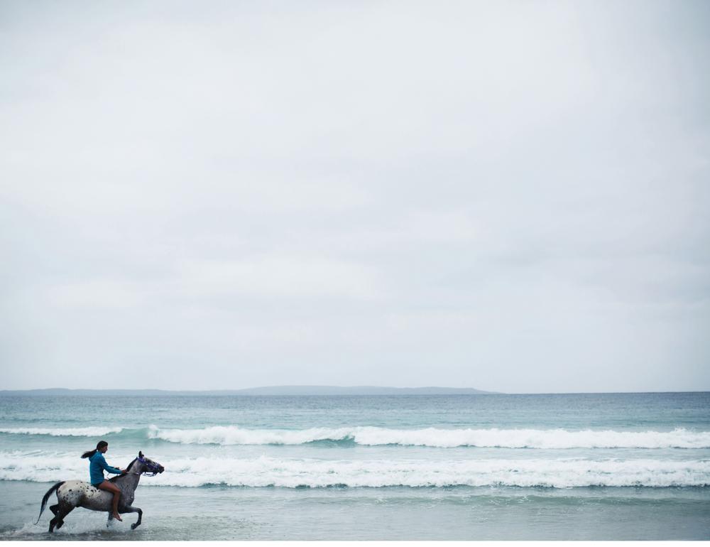 Sheridan.Nilsson.Horse.Portrait.03.jpg