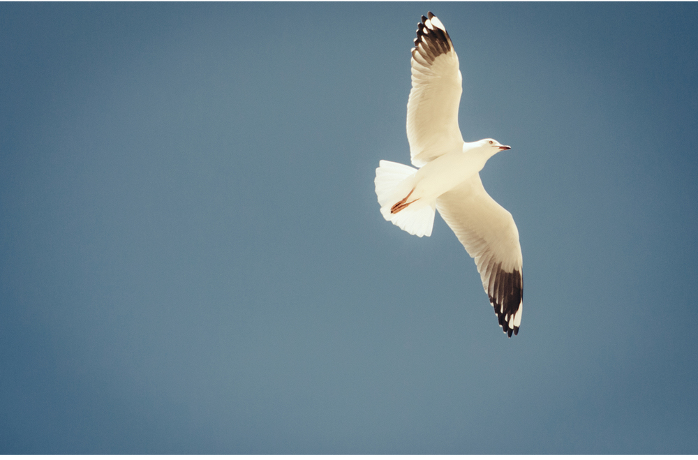 chasing seagulls.03.jpg