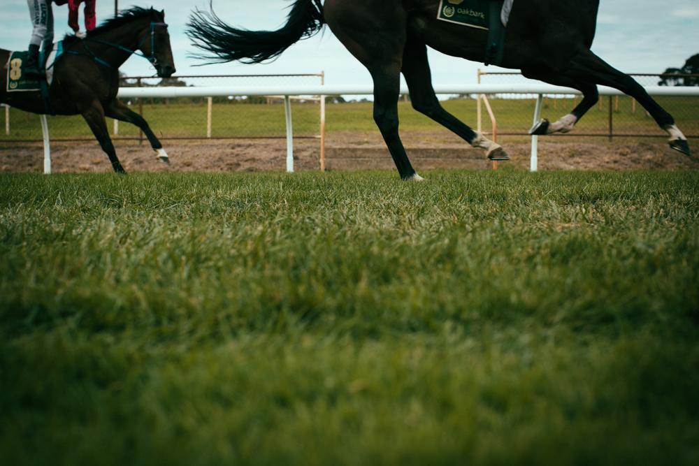 oakbank_racecourse_sheridan_nilsson.17.JPG