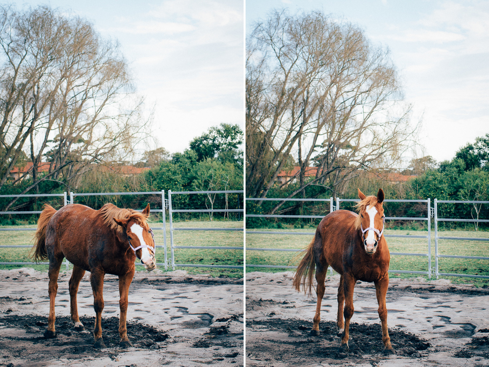 sheridan_nilsson_la perouse_horse.-1.jpg