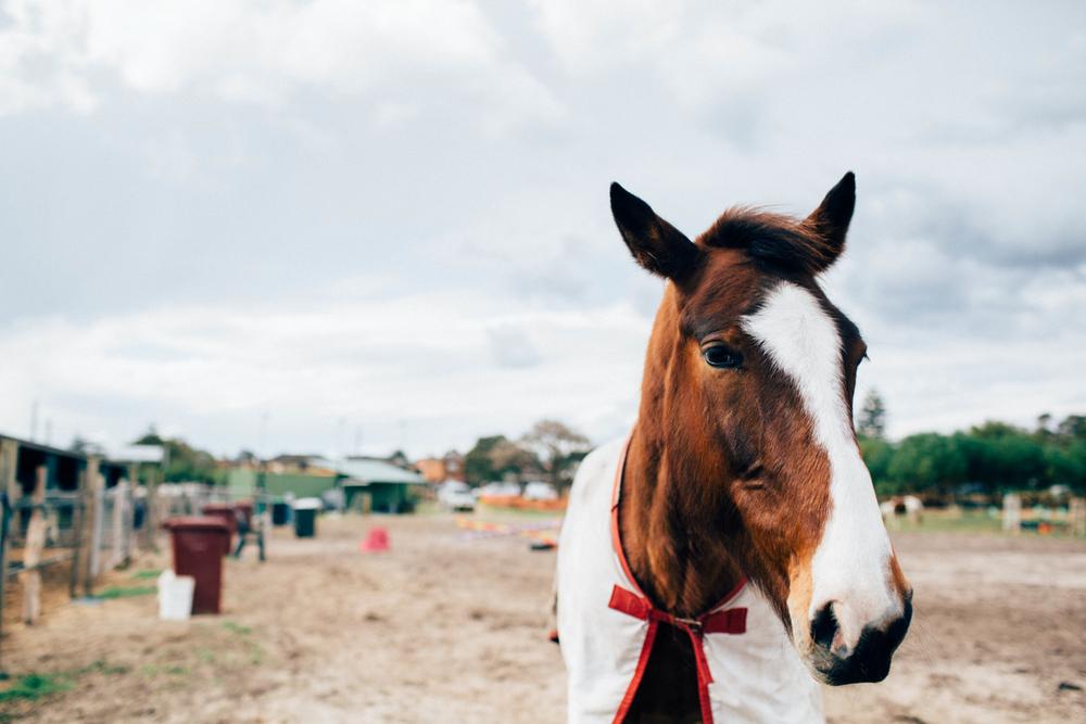sheridan_nilsson_la perouse_horse.-2.jpg