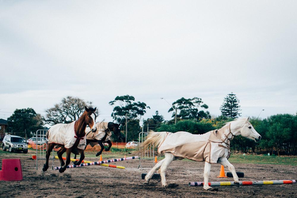 sheridan_nilsson_la perouse_horse.-3.jpg