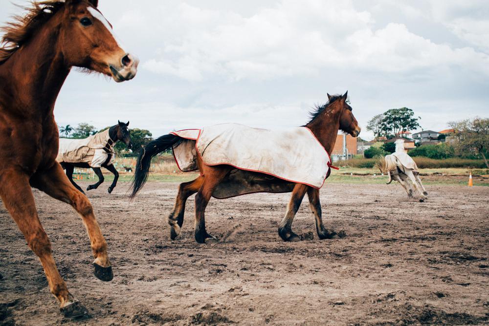 sheridan_nilsson_la perouse_horse.-4.jpg