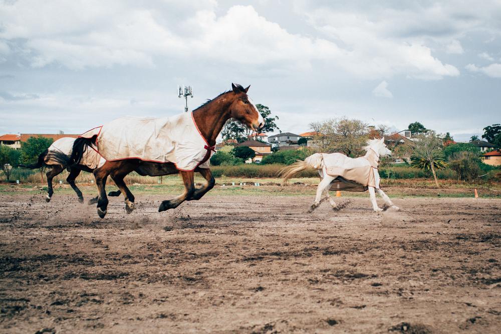 sheridan_nilsson_la perouse_horse.-5.jpg