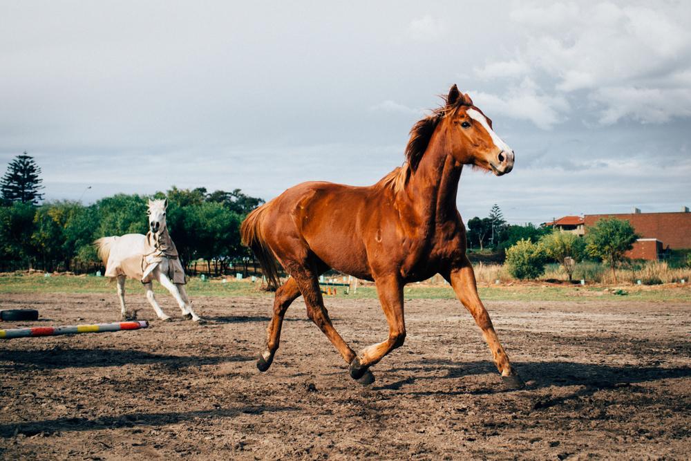 sheridan_nilsson_la perouse_horse.-6.jpg