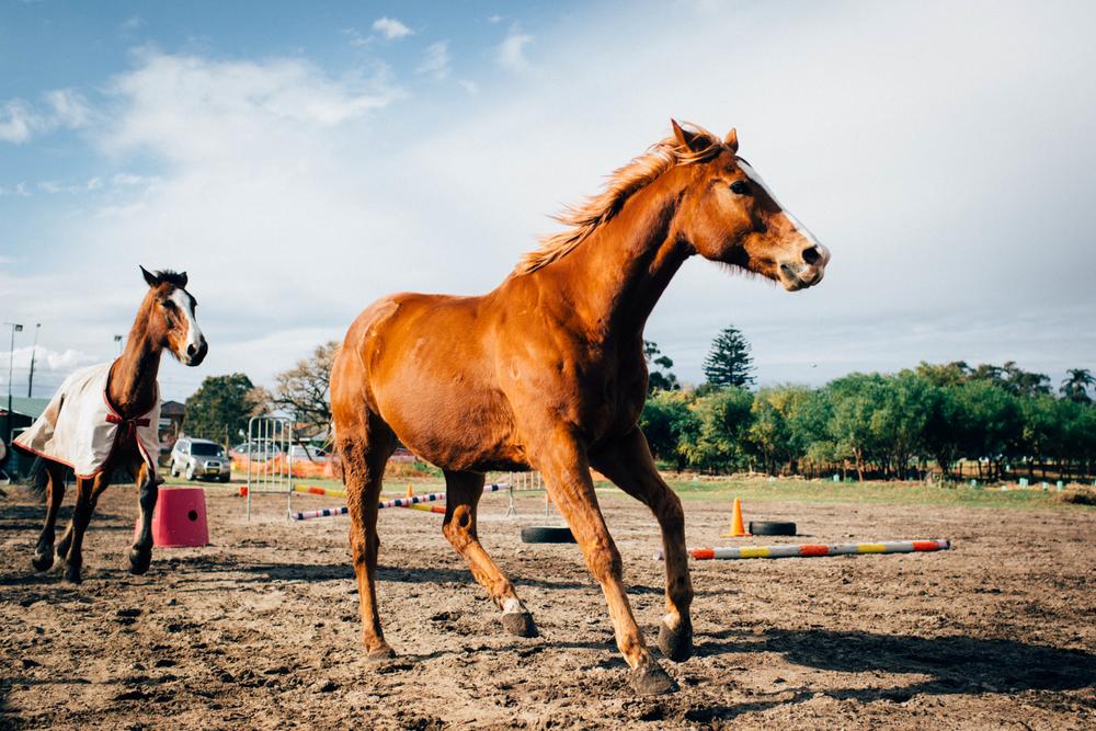 sheridan_nilsson_la perouse_horse.-7.jpg