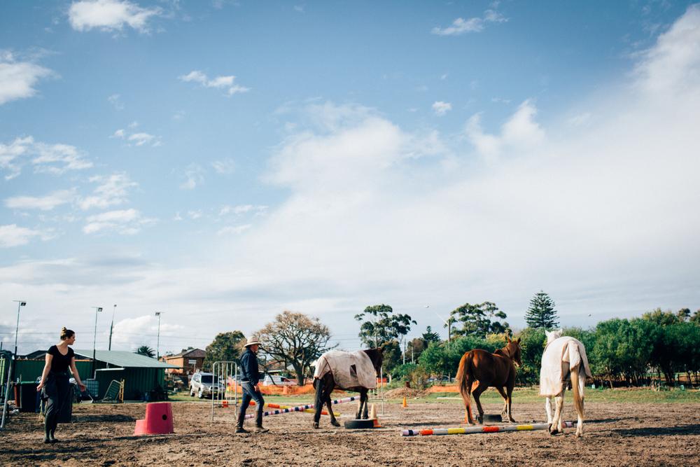 sheridan_nilsson_la perouse_horse.-8.jpg