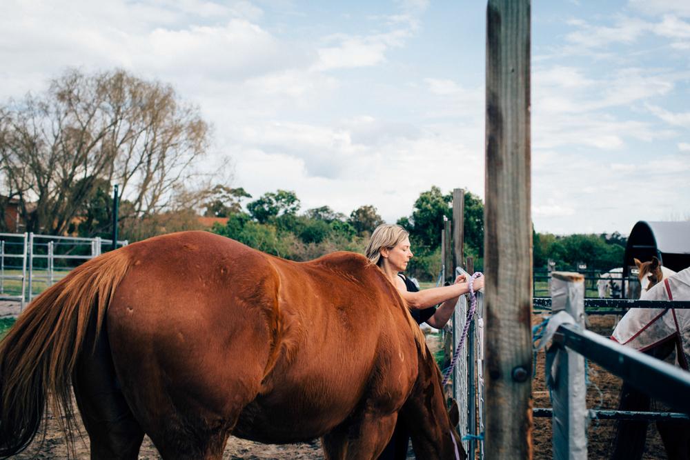 sheridan_nilsson_la perouse_horse.-9.jpg