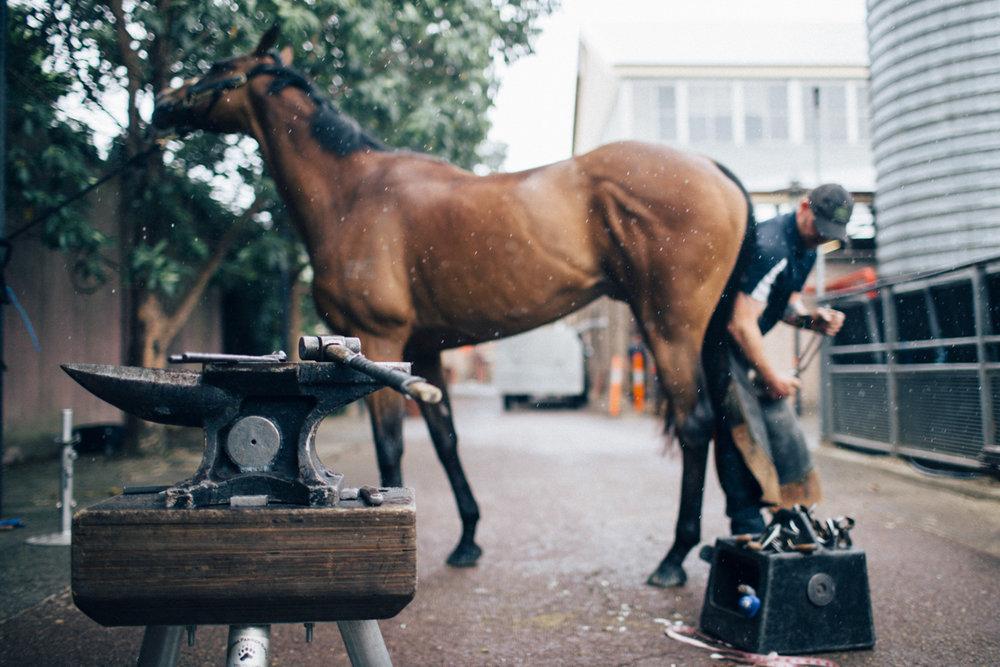 Mark_Innes_Farrier_Centennial_Park_Equestrian_Centre-167.jpg