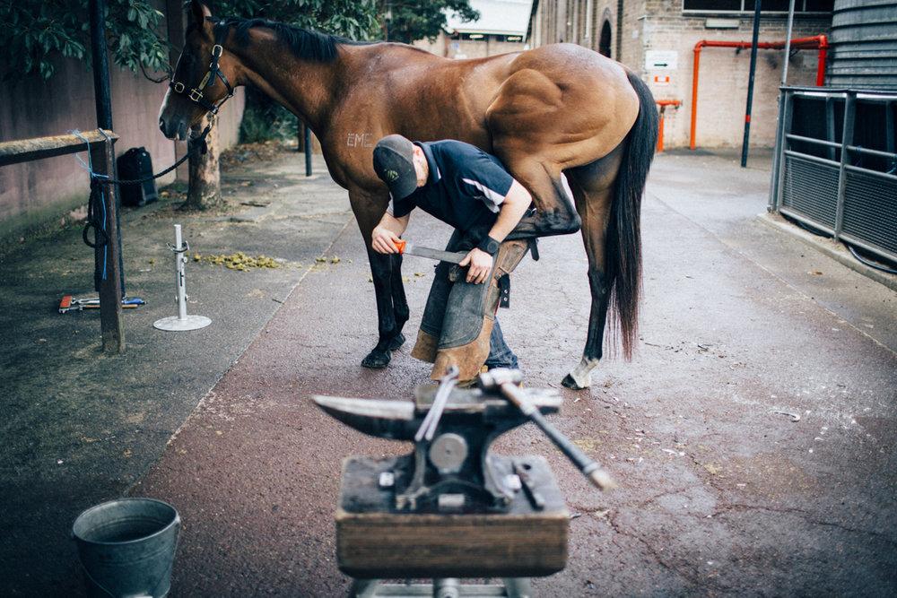 Mark_Innes_Farrier_Centennial_Park_Equestrian_Centre-177.jpg
