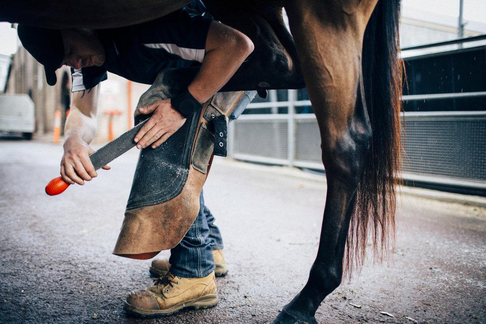 Mark_Innes_Farrier_Centennial_Park_Equestrian_Centre-181.jpg