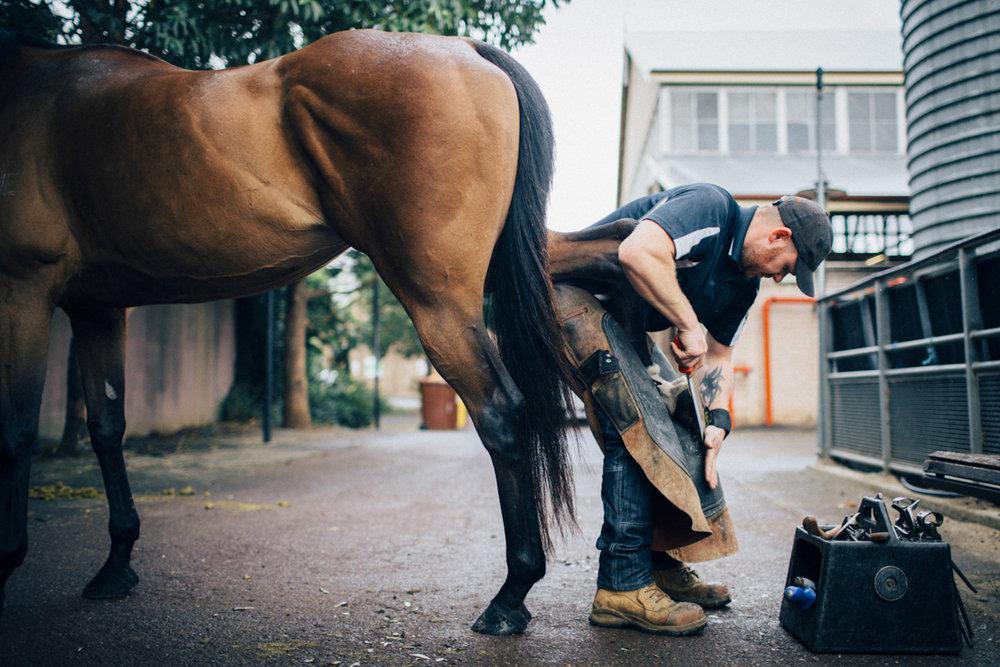 Mark_Innes_Farrier_Centennial_Park_Equestrian_Centre-169.jpg