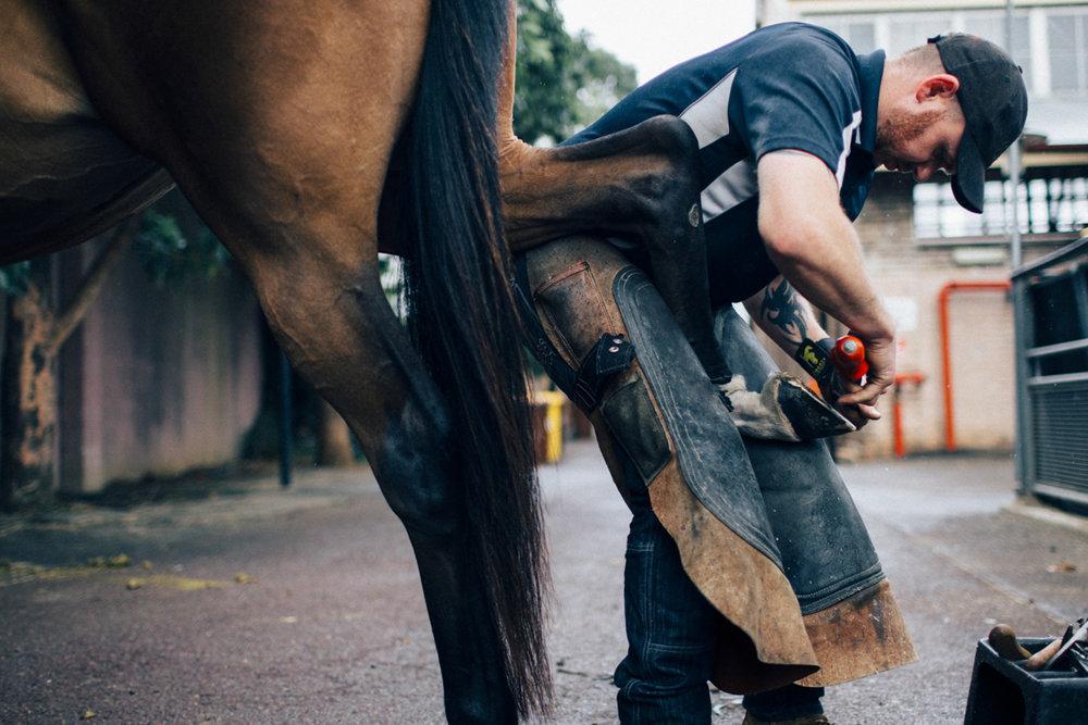 Mark_Innes_Farrier_Centennial_Park_Equestrian_Centre-172.jpg