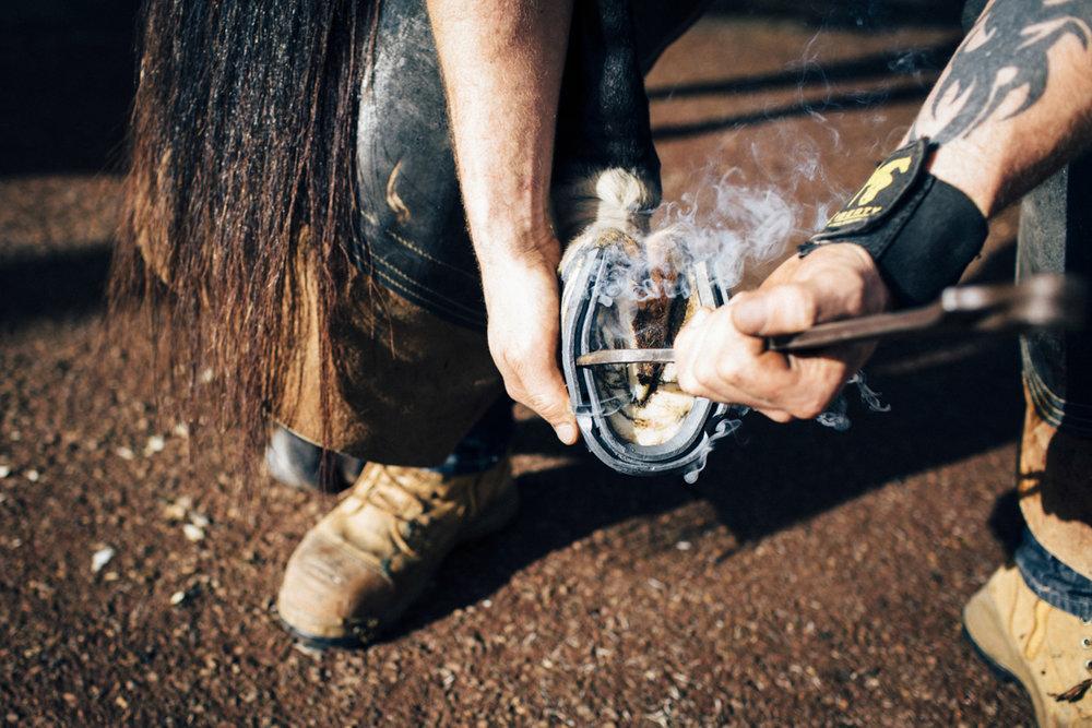 Mark_Innes_Farrier_Centennial_Park_Equestrian_Centre-242.jpg