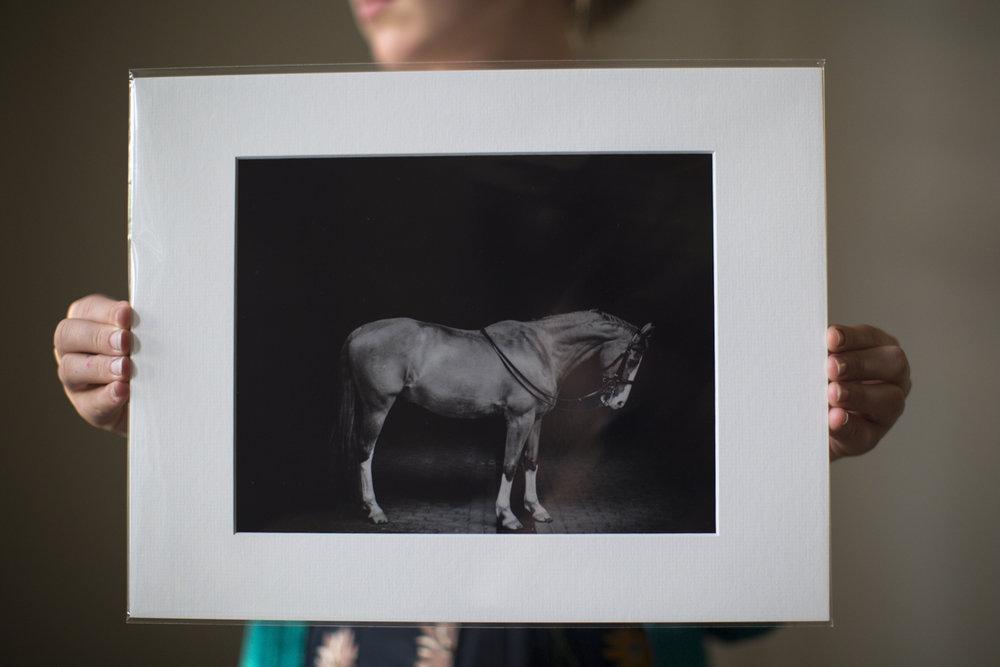 centennial_park_equestrian_centre_horse_photography.-4254.jpg