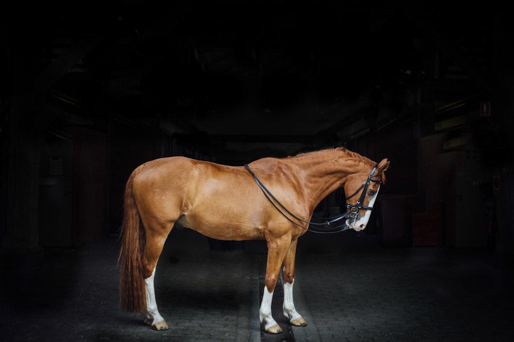 centennial_park_equestrian_centre_horse_photography.-4.jpg