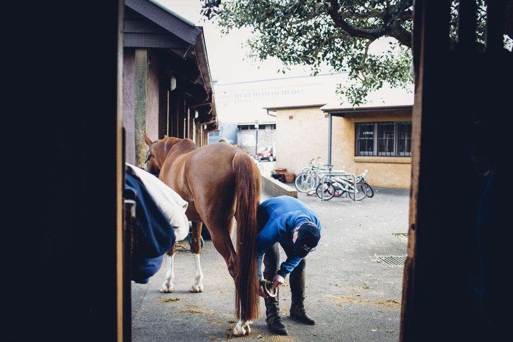 JED_Centennial_Park_Equestrian_Centre.078.jpeg