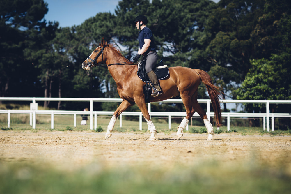 JED_Centennial_Park_Equestrian_Centre.152.jpeg
