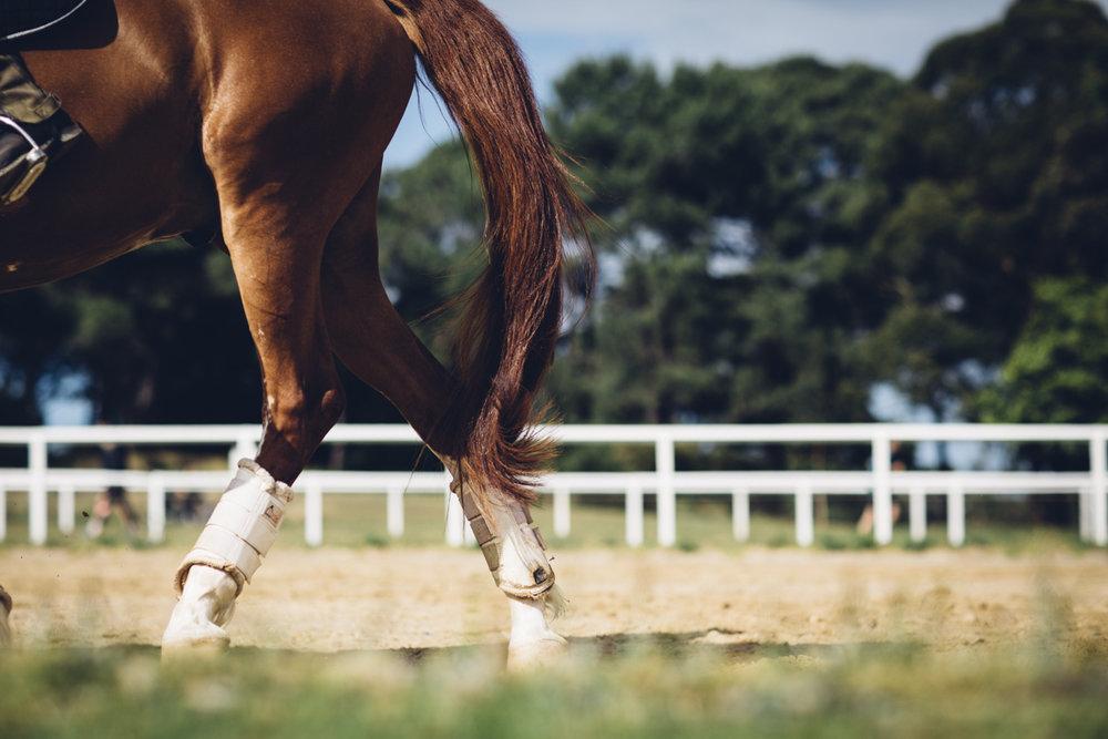 JED_Centennial_Park_Equestrian_Centre.007.jpeg