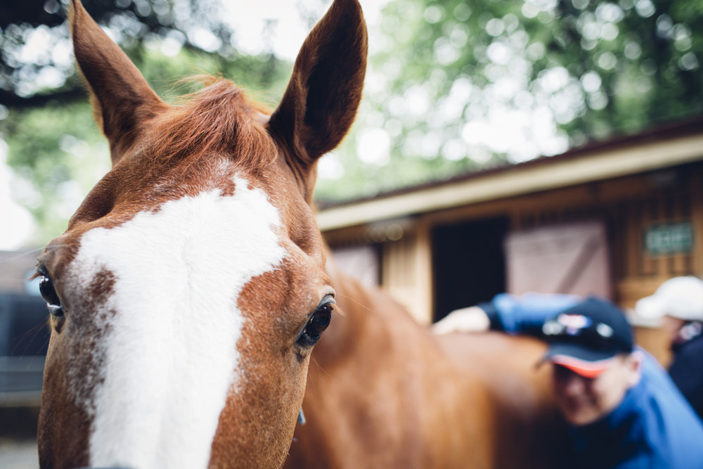 JED_Centennial_Park_Equestrian_Centre.082.jpeg