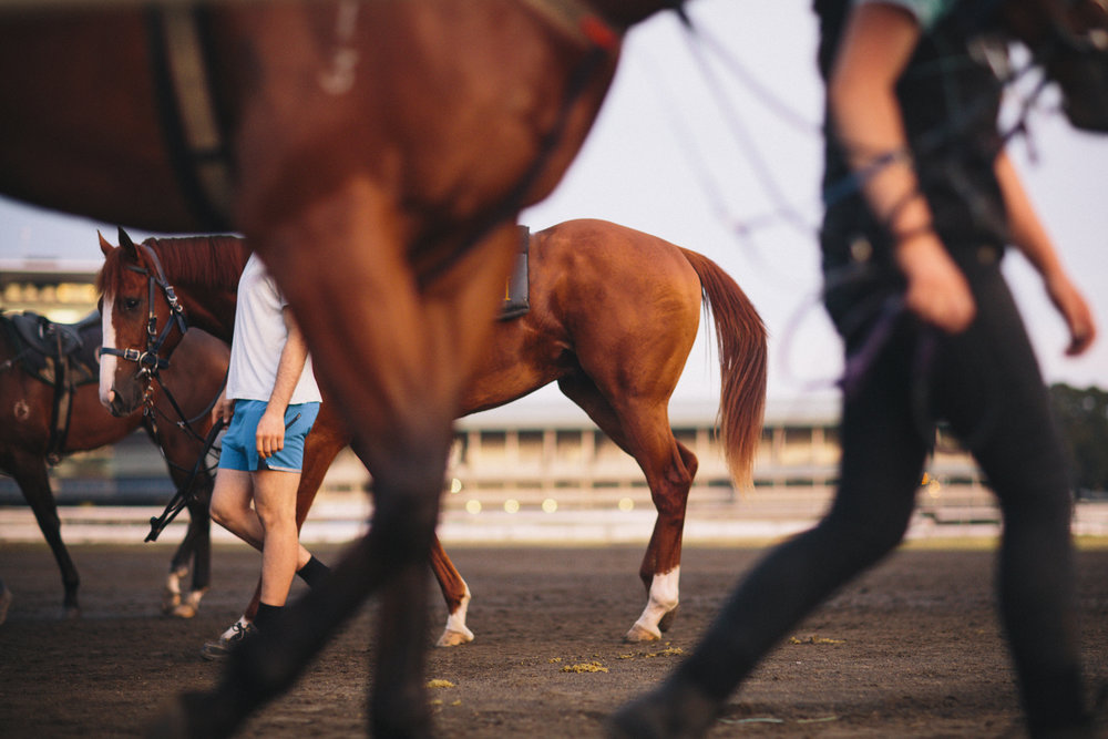 randwick_racecourse_australian_turf_club-3510.jpg