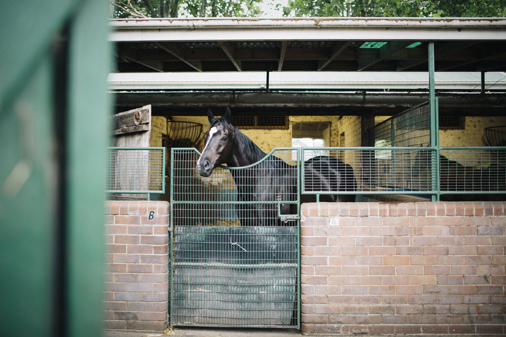 randwick_racecourse_australian_turf_club-3938.jpg