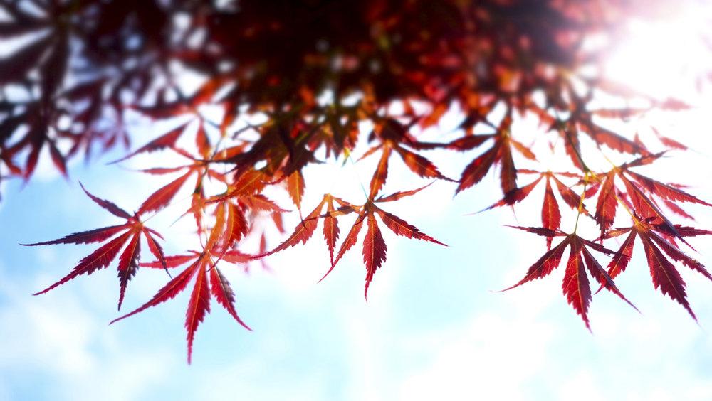 sheridan_nilsson_japan-21.jpg