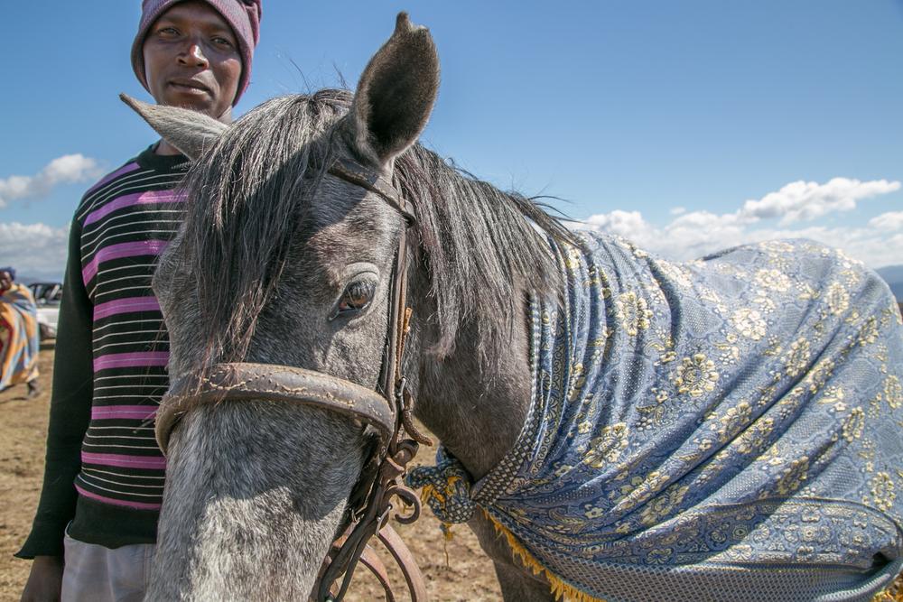 Horse-4458.jpg