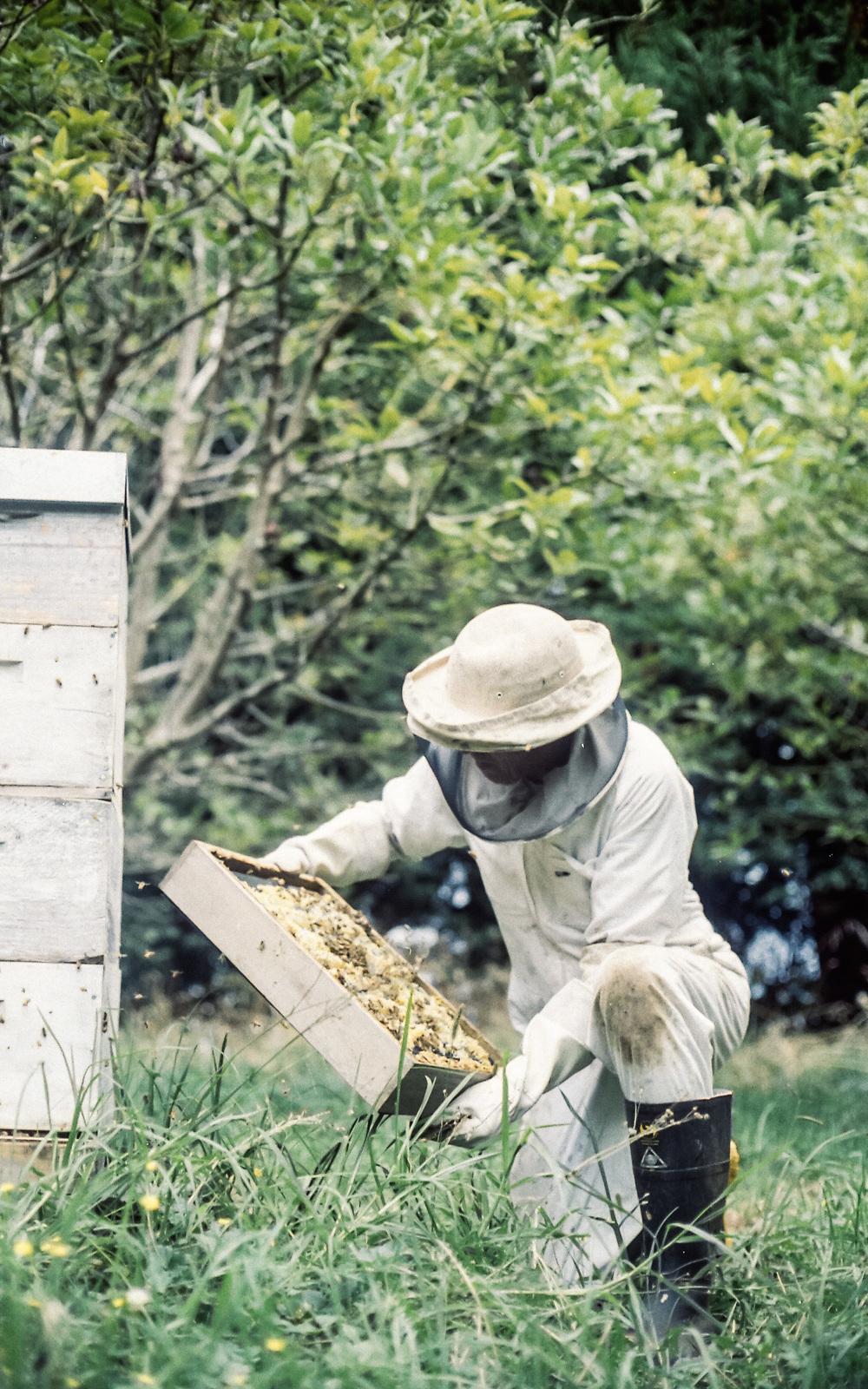 Hives-2.jpg