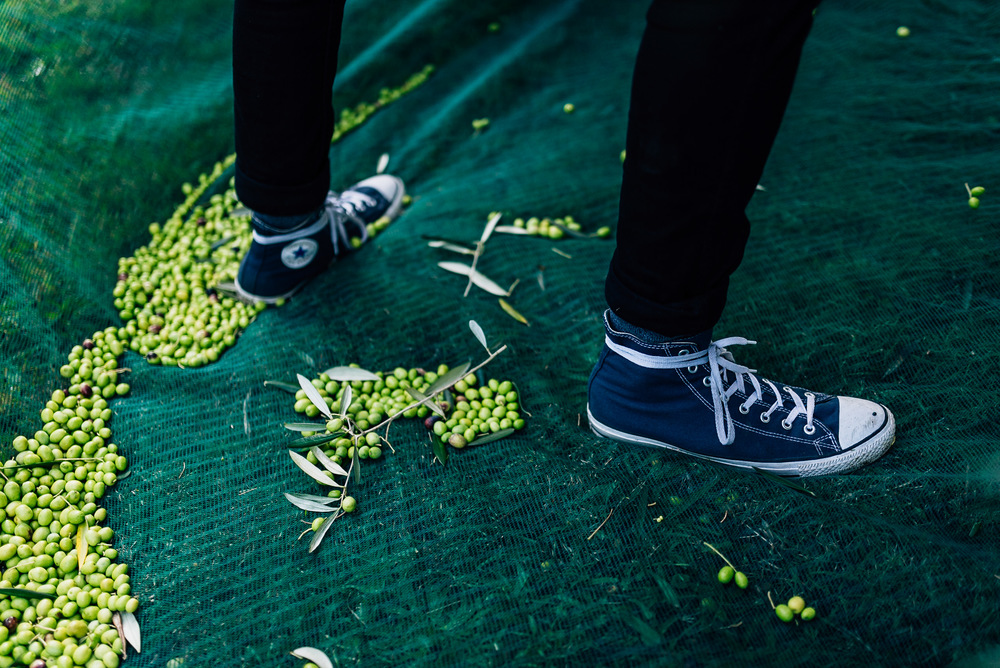 Olive Pick-7.jpg