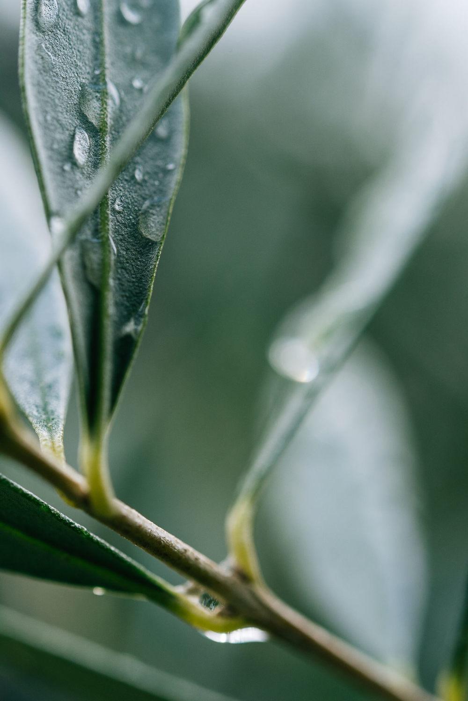 Olive Pick-15.jpg