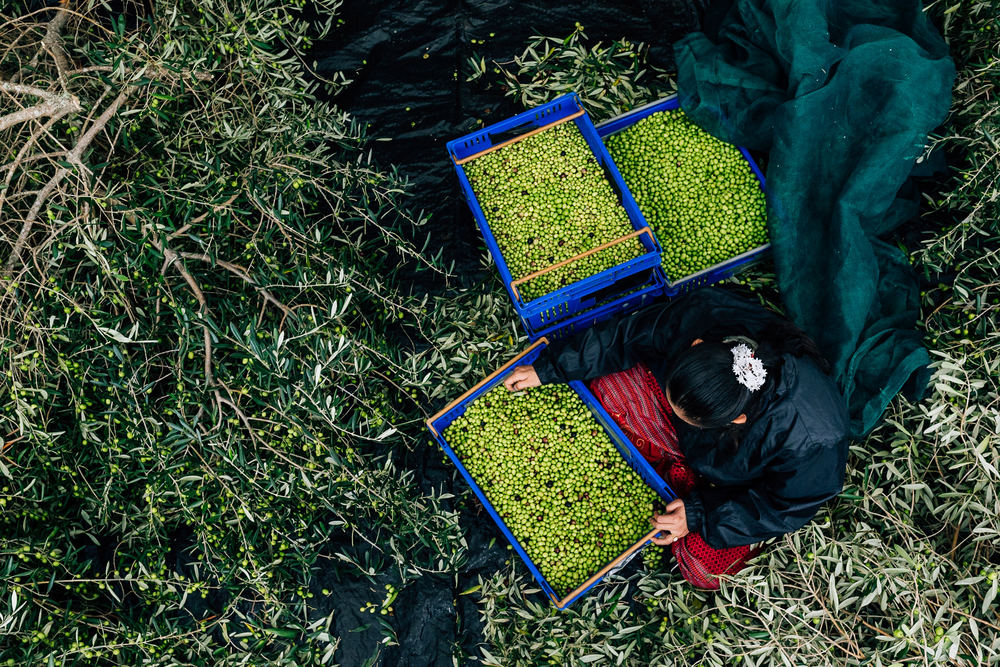 Olive Pick-21.jpg