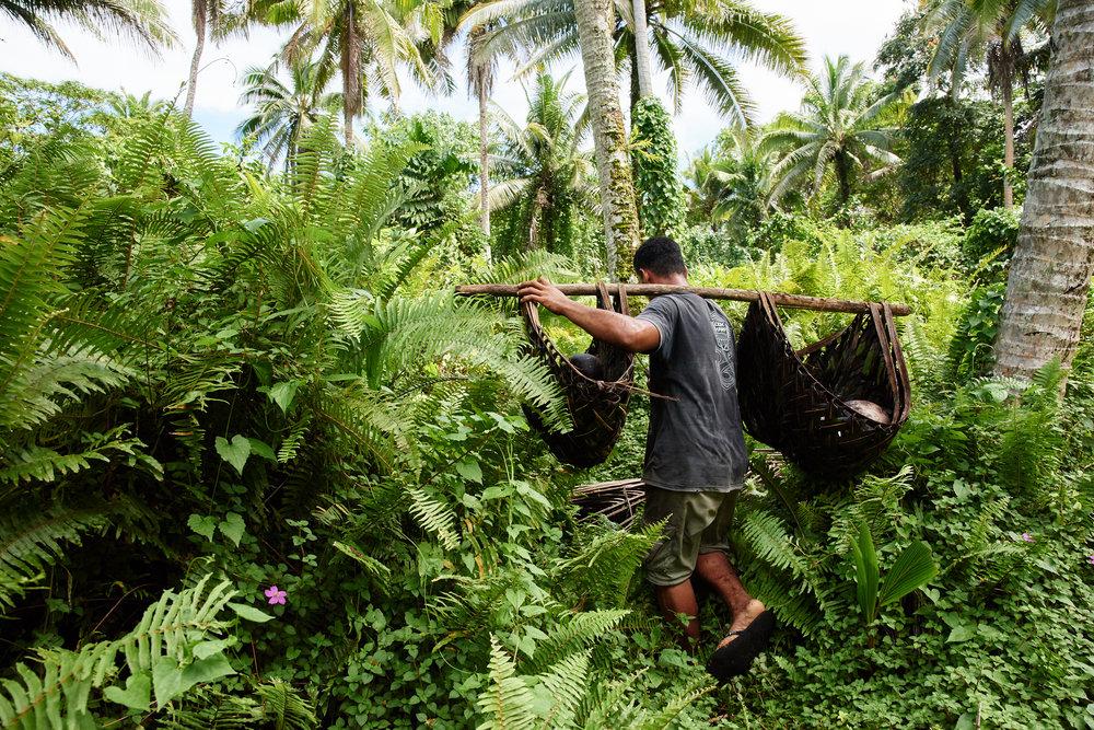Samoa Website 6.jpg