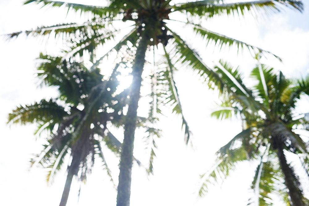 Samoa Website 10.jpg