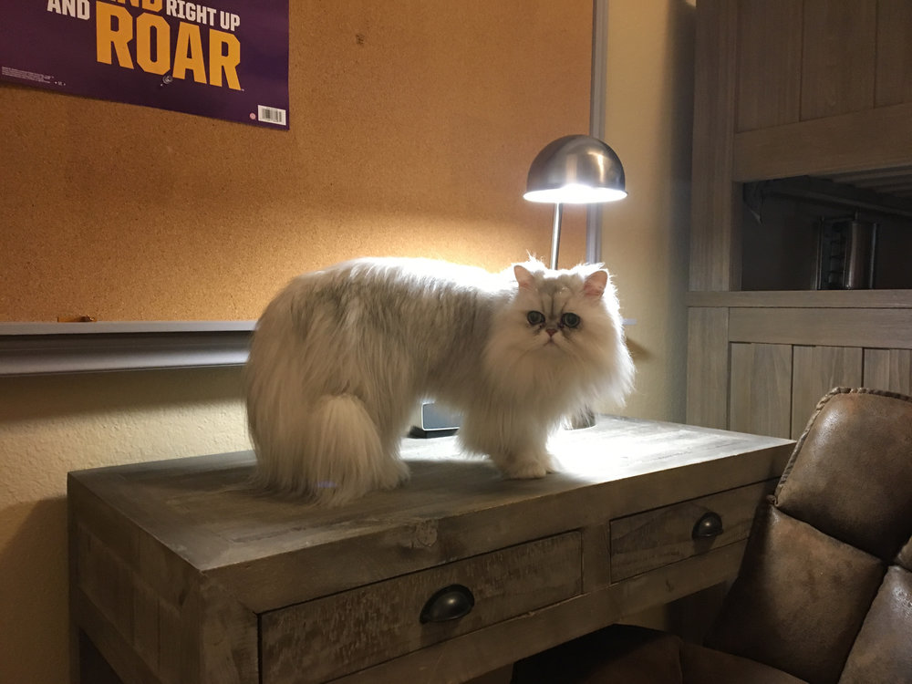cat lamp copy.jpg