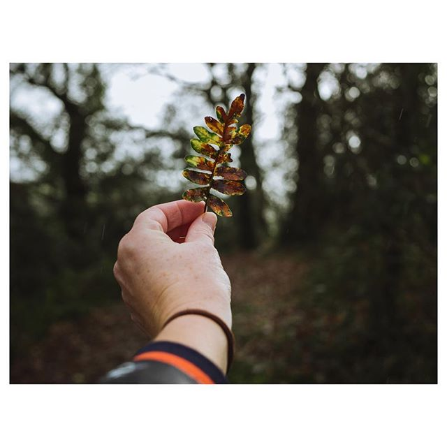 An alternative Christmas tree for the winter solstice.  Cannot wait for the light to start creeping back into our lives. . . . . . . . #wintersolstice  #gameoftones #christmastree  #gloomandglow #awakethelight #jeweledlight #chasinglight #winterlight #subjectlight #mystoryoflight #lightinspired #momentsofmine  #momentsofmine #theartofslowliving #seekthesimplicity #embracingtheseasons #livethelittlethings #littlestoriesofmylife #aquietstyle  #inspiredbynature #aseasonalshift  #moodygrams #stayandwander #artofvisuals #lumixuk