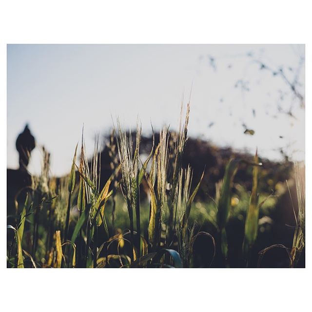 Winter walks. . . . . . . . #gloomandglow  #awakethelight #jeweledlight #chasinglight #winterlight #subjectlight #mystoryoflight #lightinspired #momentsofmine  #embracingtheseasons #livethelittlethings #littlestoriesofmylife #aseasonalshift  #mycountrysidetonic #agameoftones #moodygrams #stayandwander #artofvisuals #igerspembrokeshire #igerswales #lumixuk
