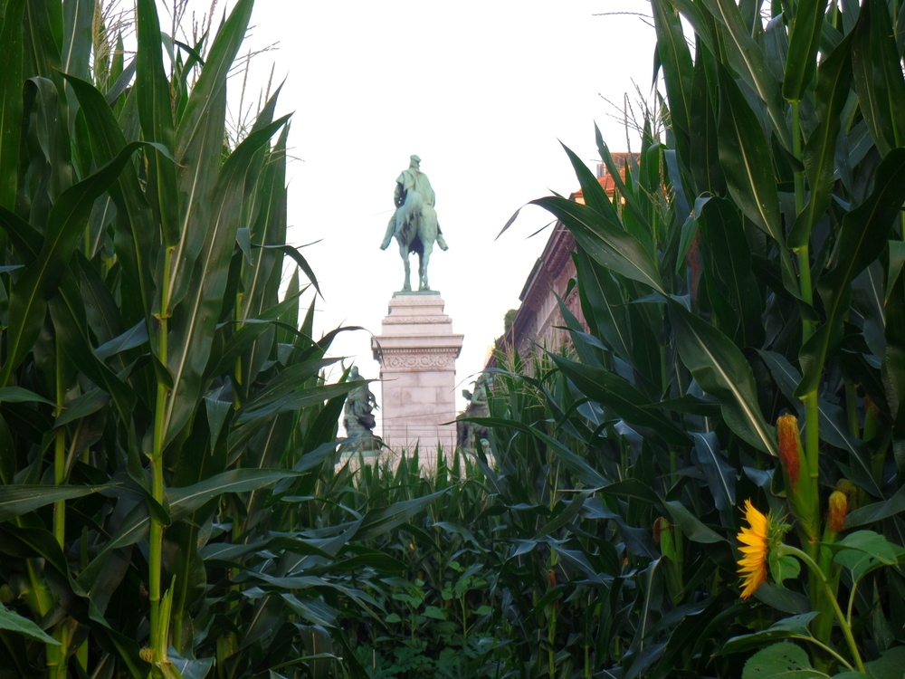 The cornfields of Milan