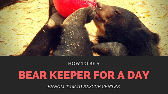 Love bears? Traveling to Cambodia? Find out how to be a bear keeper for the day!