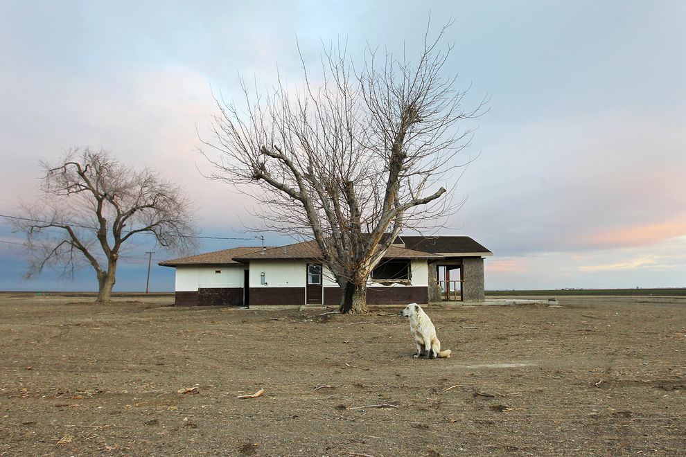 aiiaiiiyo: A dog hangs around an abandoned home amid a parched field in drought-ridden Bakersfield, CA. [990x742] By David McGnew Check this blog!