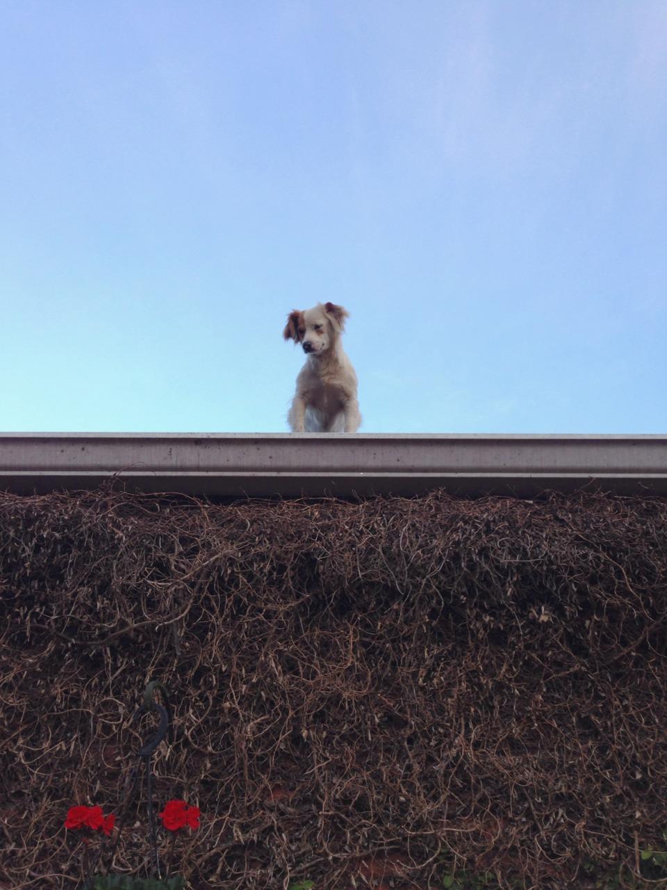 Casper on the roof       —Dorn