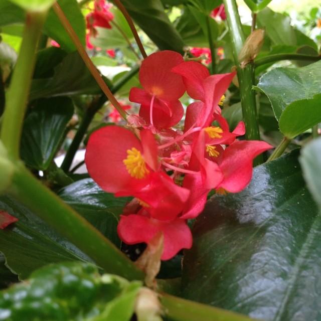 Last blooms      —Dorn