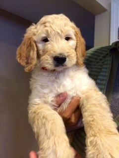 Meet Louie