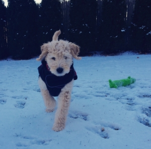 Louie in his new jacket from PetCo - This is his first time seeing and walking on snow.