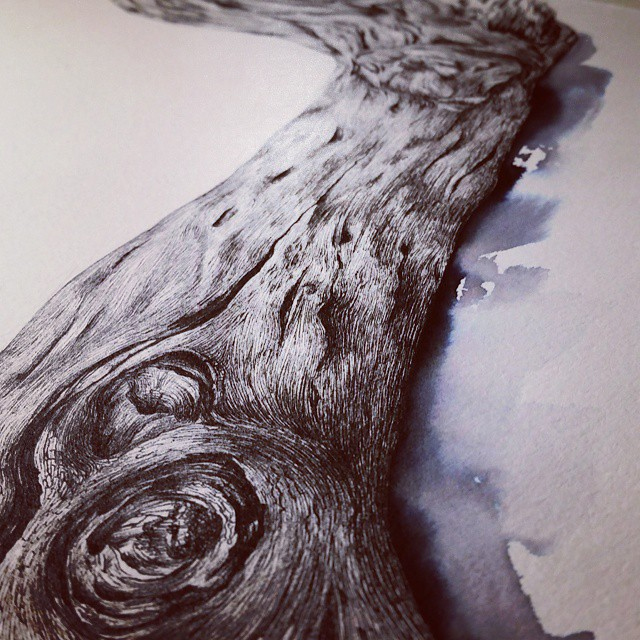 driftwood drawing -detail.jpg