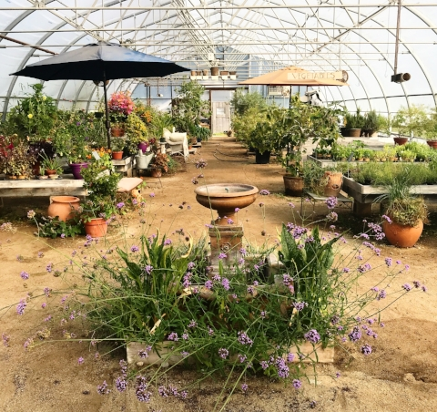 the greenhouse at The Good Earth