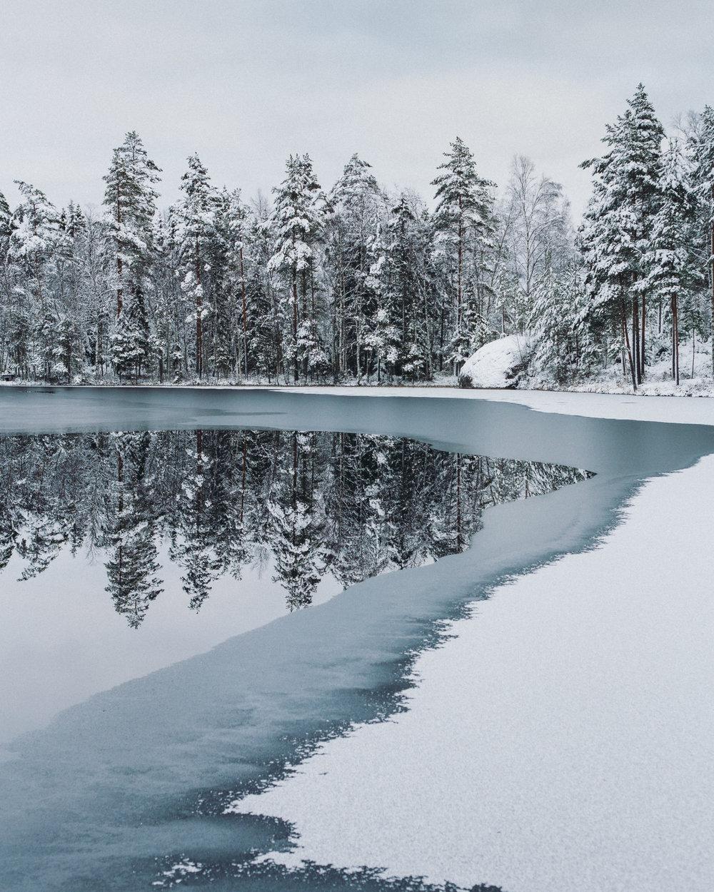 metsä ja lampi jäässä-2.jpg